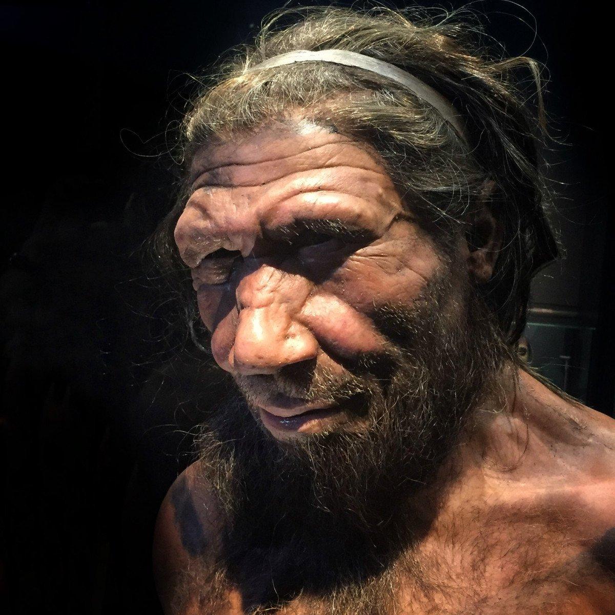 Néandertal et les oiseaux
